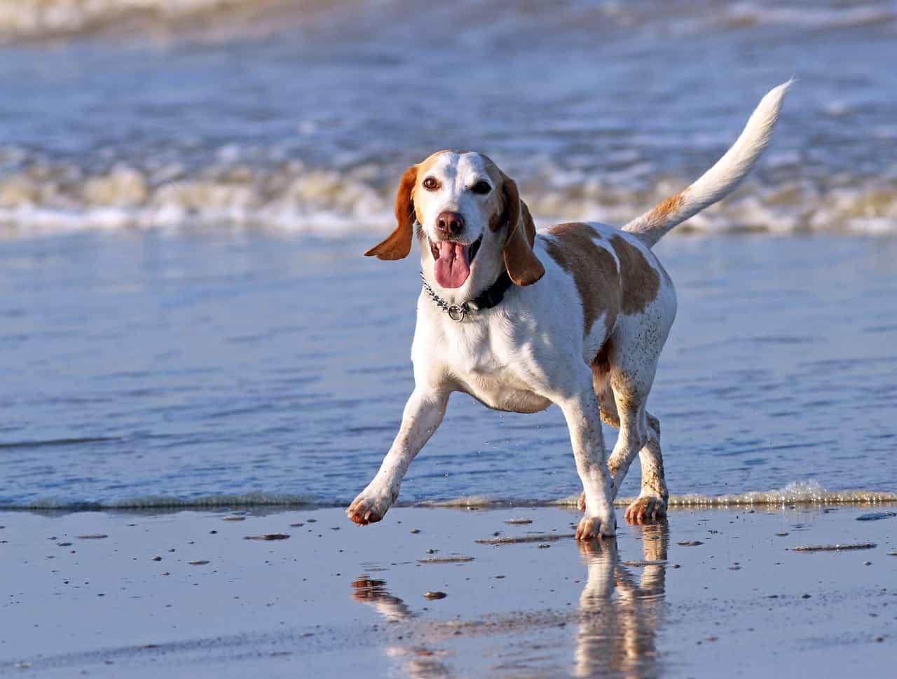 planes de salud para mascotas